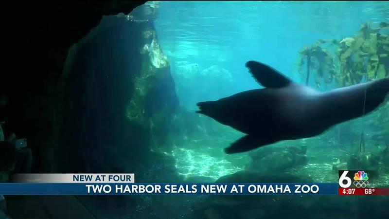 Harbor seals at Omaha zoo