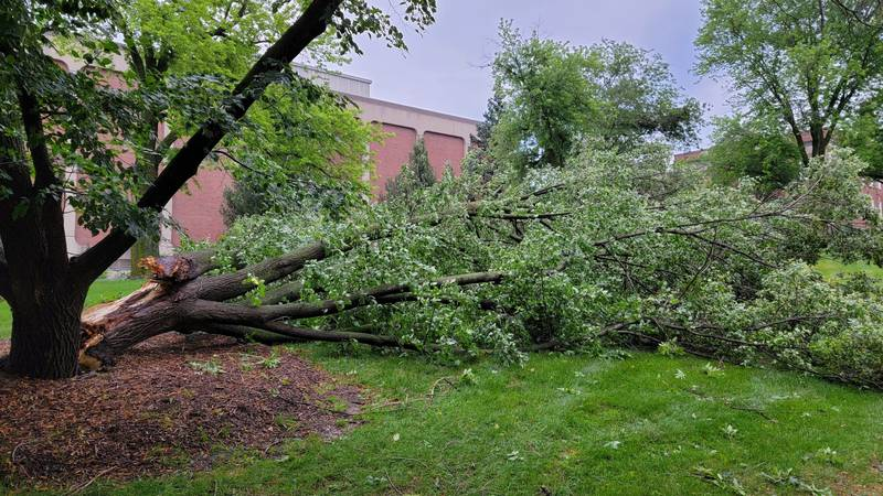 Trees across the metro are damaged from overnight storms.