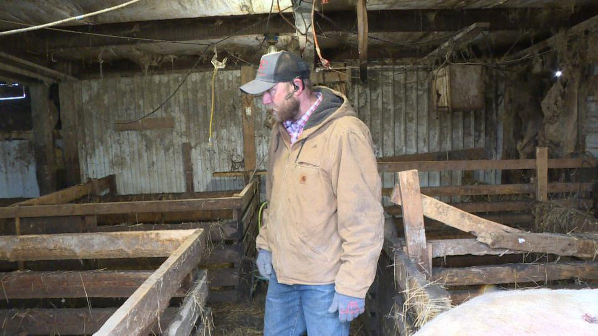 Eric Alberts surveys his barn full of dead pigs on Tuesday, Feb. 19, 2019, after flooding...