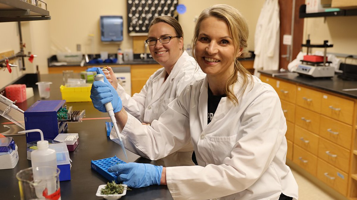 The first ISO-certified cannabis lab in Nebraska is located at Doane University in Crete.
