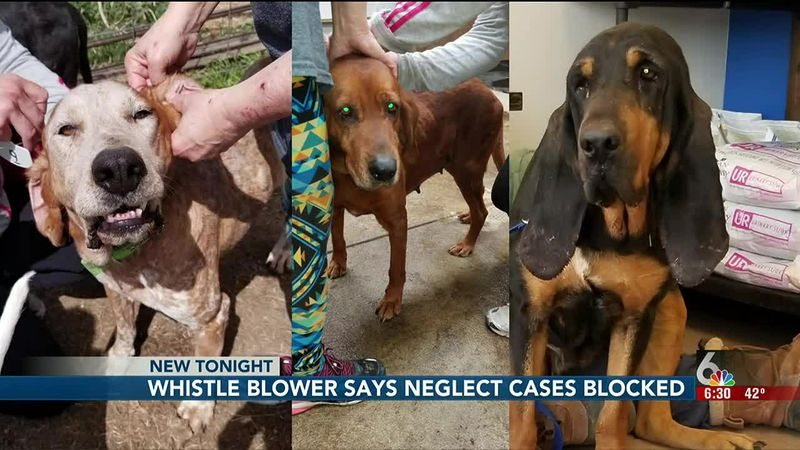 Startling allegations that several kennel operators escaped criminal neglect charges because...