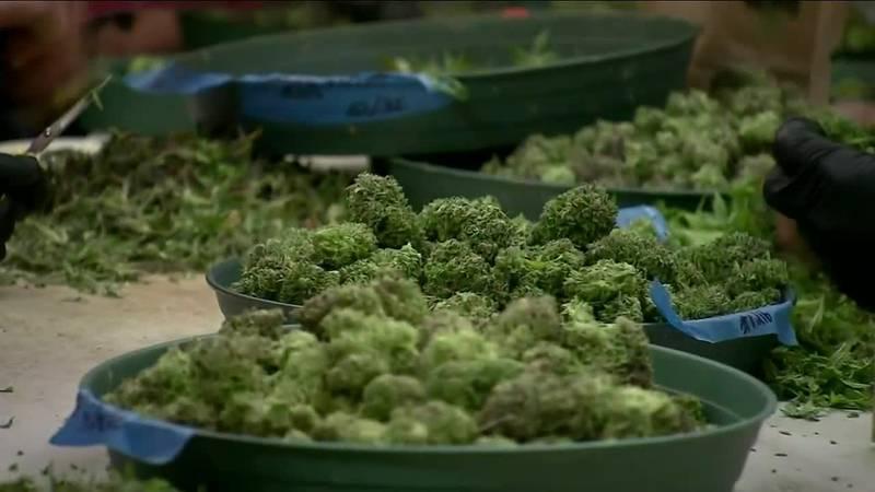 Marijuana talks continue at the Nebraska Legislature.