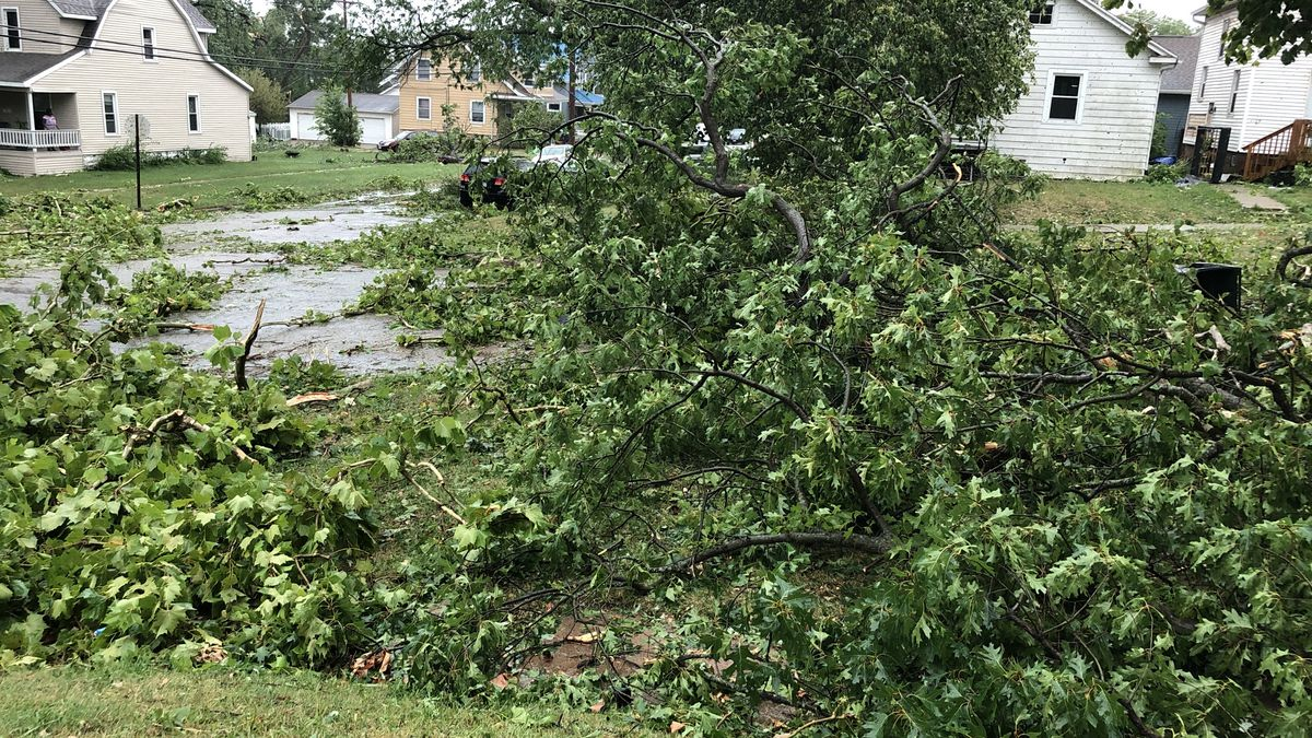 Damaged tree limbs and branches