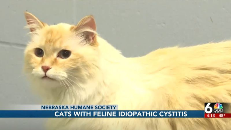 Sometimes adoptable pets need a little extra care. Pam Wiese with the Nebraska Humane Society...