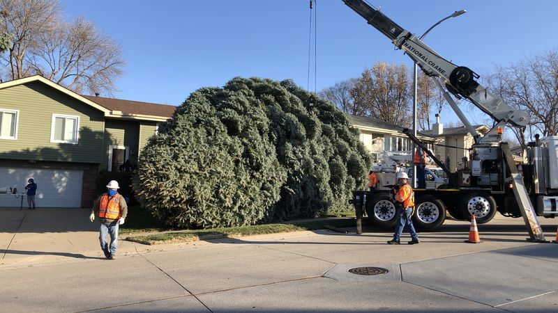 Omaha Christmas Tree cut down Nov. 16, 2020