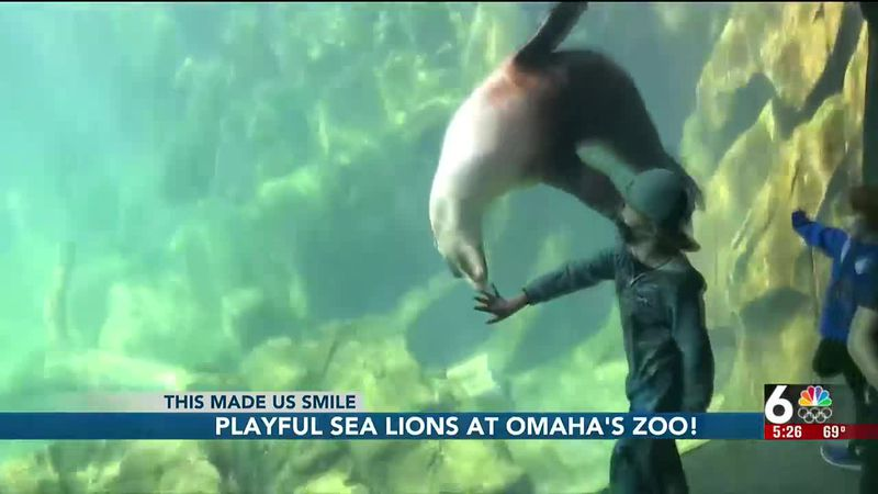 Two harbor seals are now calling Omaha's Henry Doorly Zoo and Aquarium home.