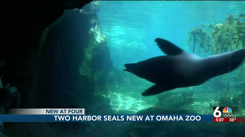 Harbor seals at Omaha zoo