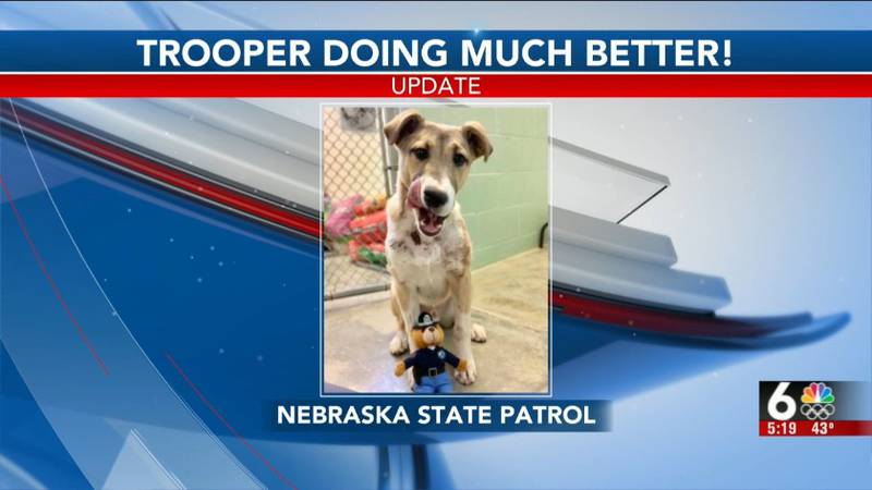 A dog found hurt near McCook is on the mend and up for adoption.