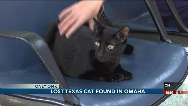 An Omaha family took care of a stray cat for about a week before taking it to a vet to get...