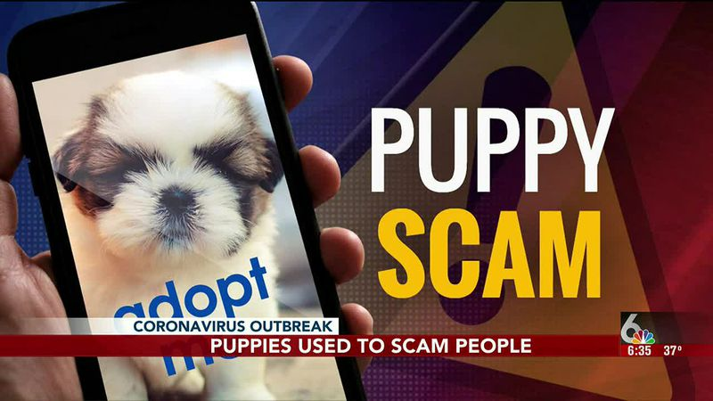 Scammers are taking advantage of quarantine puppies.