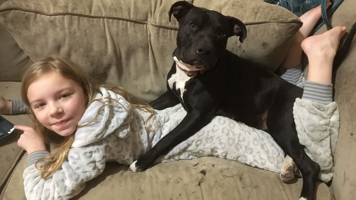 The family describes Boots as a 2-year-old female black pit bull-Lab mix. Boots has white on all four of her paws and on her chest, and she is microchipped. They are offering a $1,000 reward for the safe return of their dog and asks anyone who knows anything about Boots to call 1-531-213-7314. They say they just want their dog back — no questions asked. (Courtesy photo)