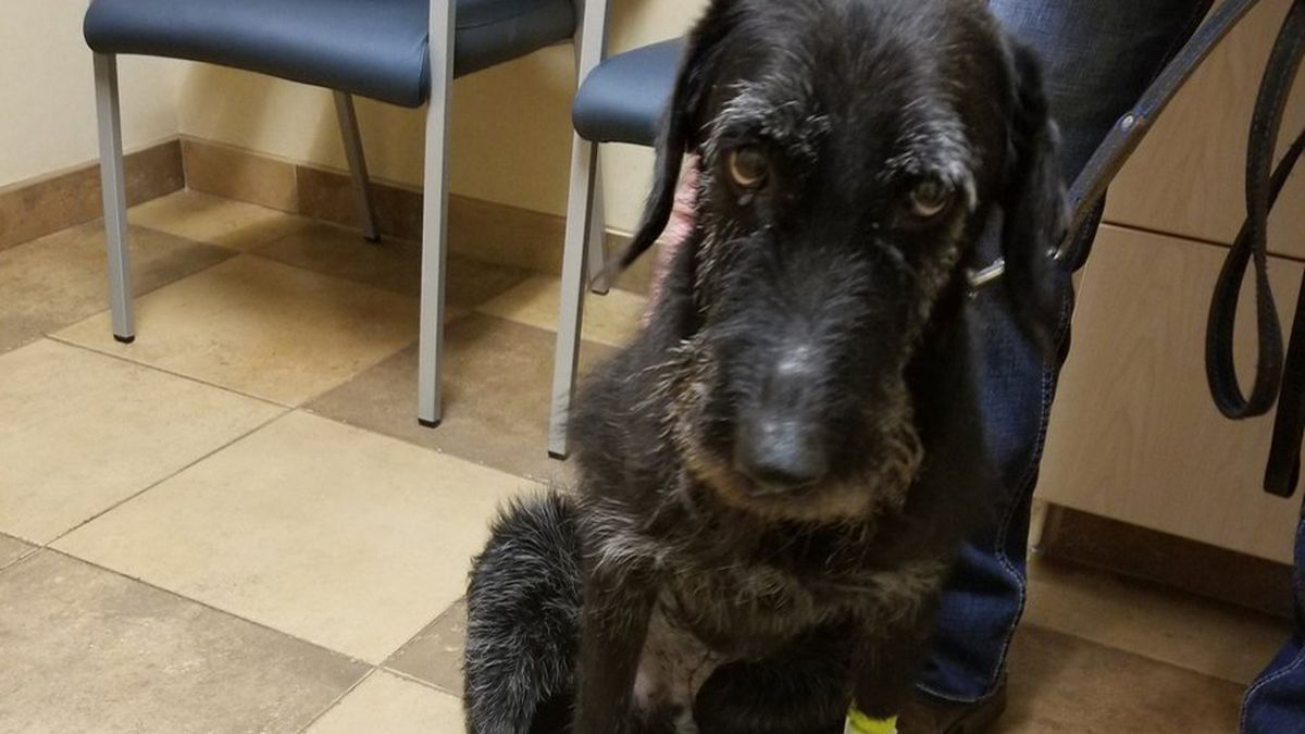 Omaha Police Bomb K-9 Duk has cancer, according to Omaha Police tweets Monday. (Courtesy of Omaha Police Department)