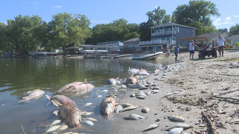 Large fish kill at Summer Haven Lake