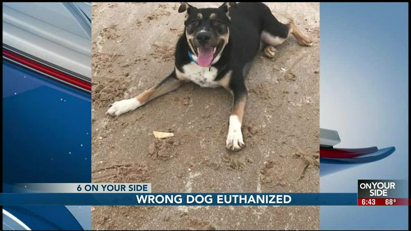 NHS apologizes after euthanizing the wrong dog
